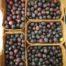 olive dolci supermercati dok